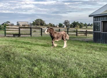 A farmyard horse outside the stable